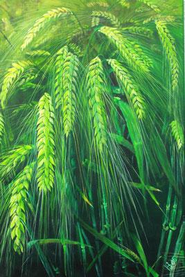 Gerste in grün: 40x60cm