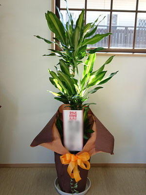 K-4(観葉植物 7,000円+税~)