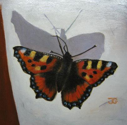 11x11 cm Vlinder Atalanta