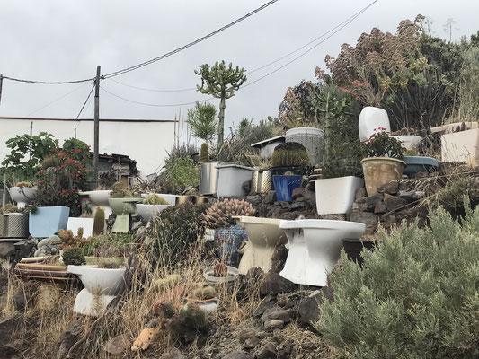 unser Spartier für die daheimgebliebenen Gartenfreunde: Es muss nicht immer Terrakotta sein!