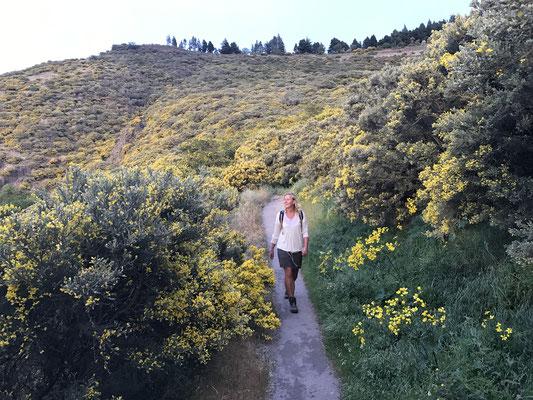 eine wunderbare Zeit zum Wandern. Frühling in den Bergen von Gran Canaria