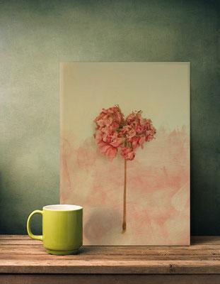Displate Metal Poster, One Pink Geranium. Vintage Photo by Victoria Herrera
