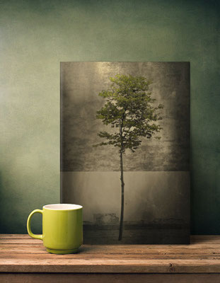 Displate Metal Poster, Once Upon a Tree. Vintage Photo by Victoria Herrera