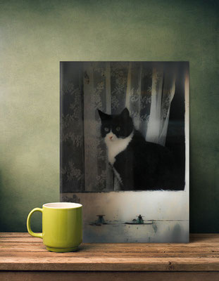 Displate Metal Poster. One Cat in the Window. Photo by Victoria Herrera