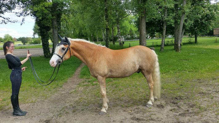 Schwerstes Pferd