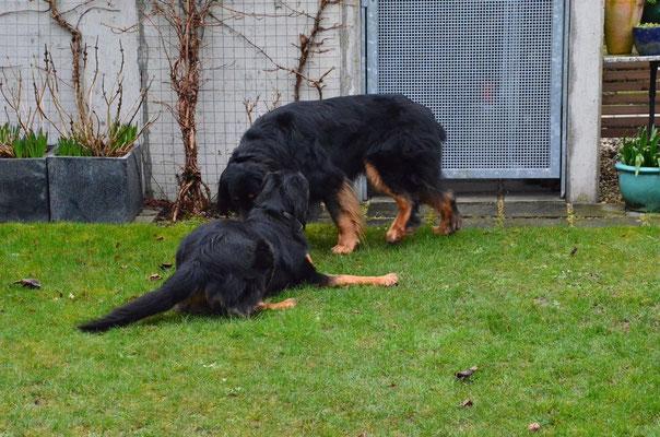 frau vom hund gedeckt