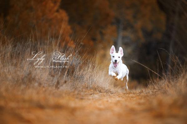 photographe extérieur pour chien portrait canin dog dans le var Brignoles Marseille Toulon Nice Aix en provence Draguignan fréjus