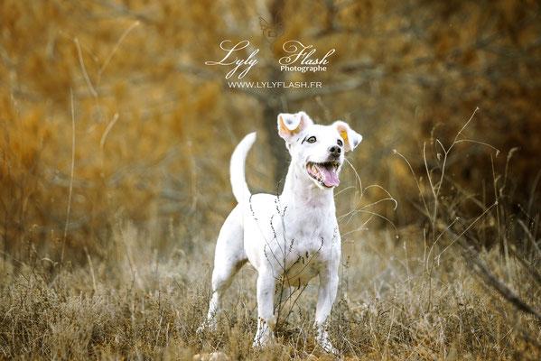 photographe canin portrait de chien dans le var Toulon Brignoles Marseille nice Aix en provence Draguignan fréjus
