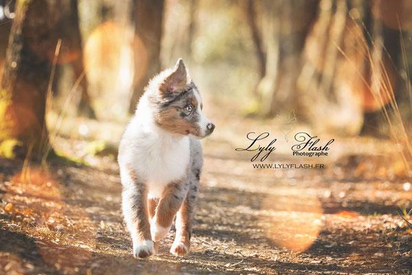 chiot en action photographie d'action pour chien de famille