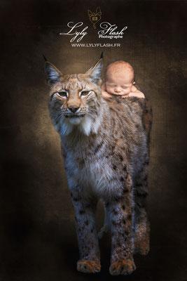photographe naissance  Forqualquiet