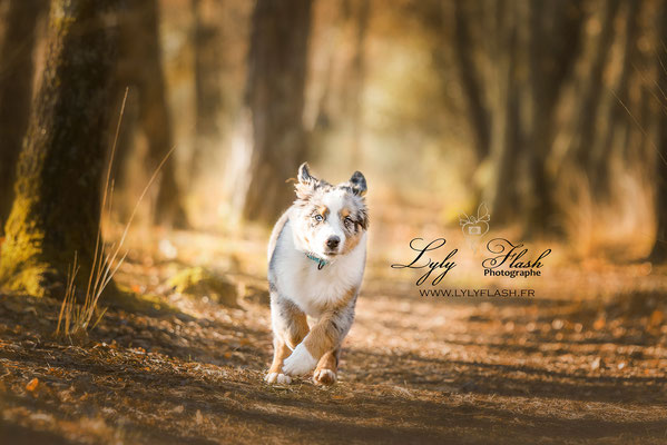 photographe de chien en extérieur