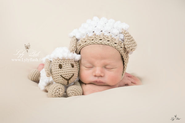 photographe var bébé mouton