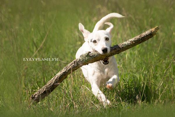 photographie canine photo de chien , photographie action var sud provence
