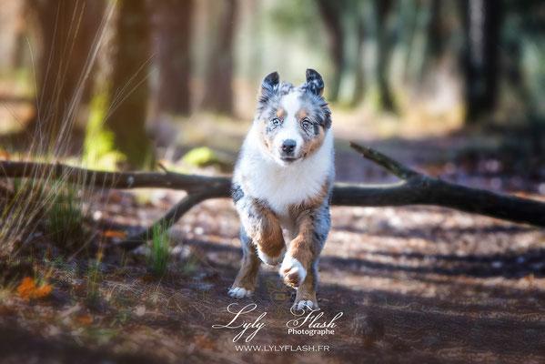 photographe extérieur pour chiot et chien