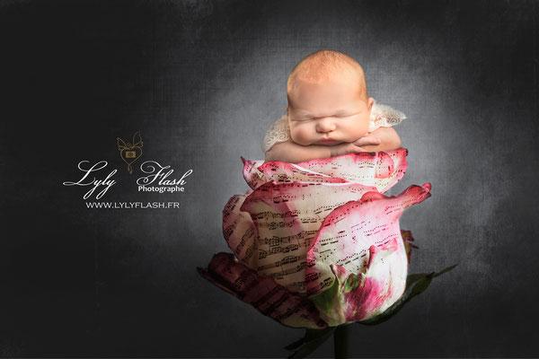 photographe d art sur rose partition de musique pour la naissance de bébé princesse Barjols  La Bastide  Baudinard-sur-Verdon  Bauduen  Le Beausset  Belgentier  Besse-sur-Issole  Bormes-les-Mimosas  Le Bourguet