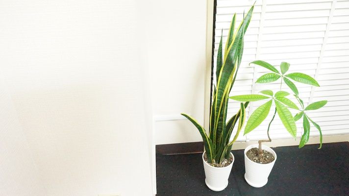 パーソナルレッスン中は必然的に呼吸回数が増えます。少しでも空気を綺麗にする為に空気清浄機に加え、空気清浄効果のある観葉植物を設置しています。