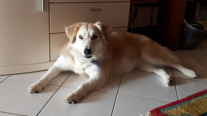 Kira (ehemals Belka)