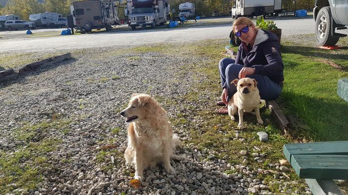 Diese zwei Hunde kamen mehrmals zu besuch, liessen sich streicheln und gingen wieder:)