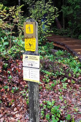 Rainforest Walk. Wölfe haben wir keine angetroffen :)