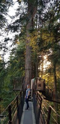 Tree Walk bei dem man von Baum zu Baum spazieren konnte mit einer super Aussicht