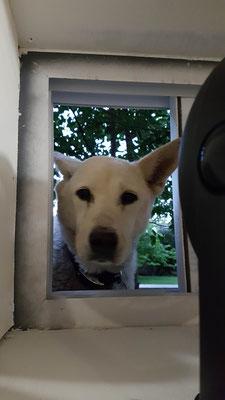 Unser Fensterhund ;)