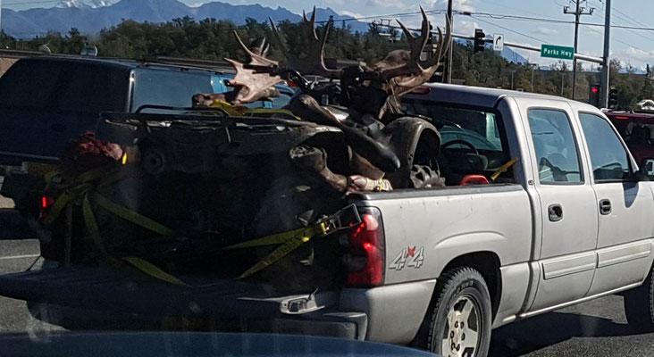 Da war wohl jemand auf Moose Jagt..