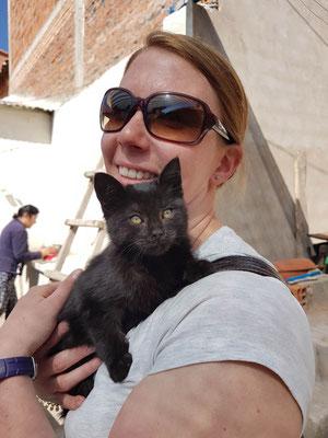 Dieses Kätzchen hätte wir am liebsten mitgenommen