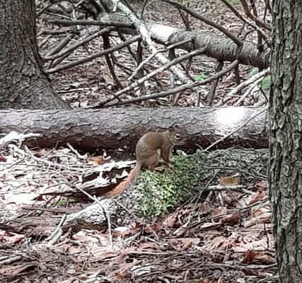 Dafür ganz viel Eichhörnchen
