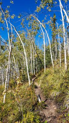 Kleine Wanderung auf einen Hügel bei Dawson City