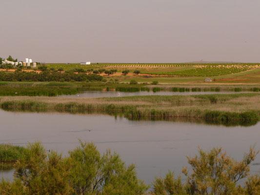 La Vega, lagune du bourg de Pedro Muñoz