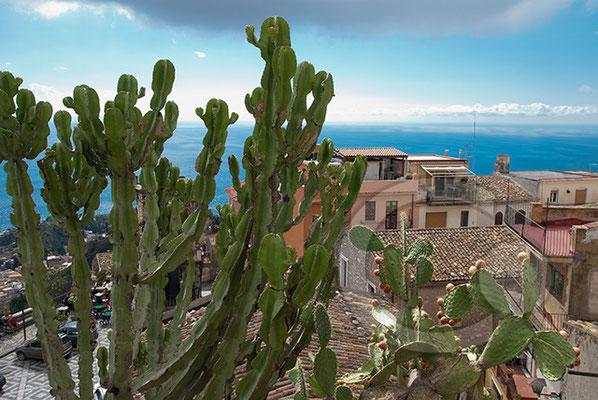 100910_0393 Kaktus Castelmola Sizilien