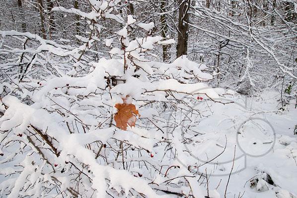 100102_DSC0040 Schnee Winter