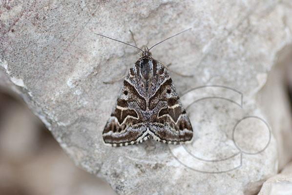 110601_DSC0541 Schmetterling Nachtfalter Tagfalter