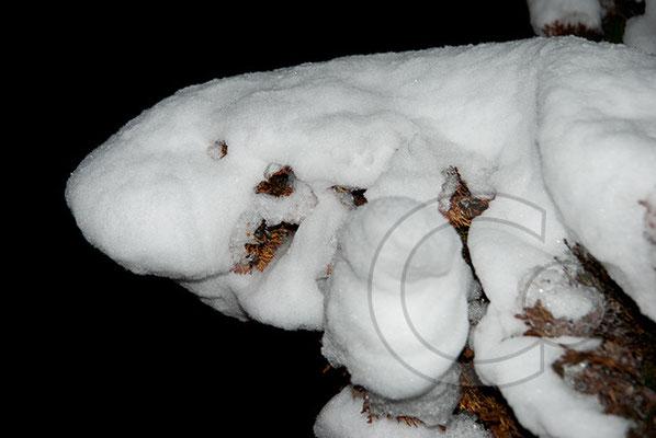 100106_DSC0058 Schnee Winter