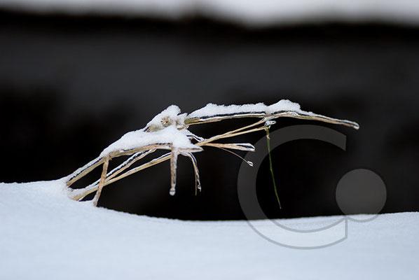 101219_DSC0161 Eis Winter