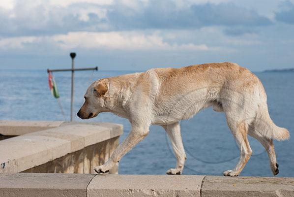 110103__DSC0406 Hund