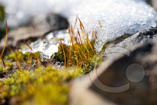 100221_DSC0029 Schnee Winter