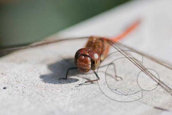 100930_DSC0034 Libelle