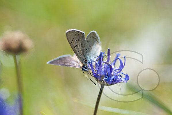 110704_DSC0804 Schmetterling Nachtfalter Tagfalter