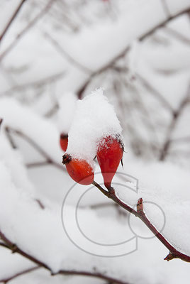 100101_DSC0024 Schnee Winter