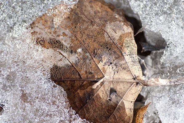110226_DSC0011 Eis Winter