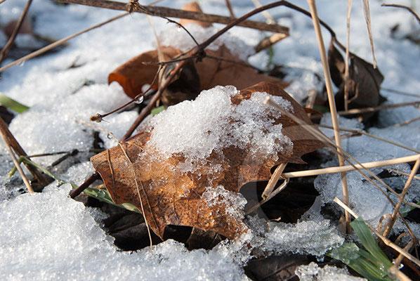 100131_DSC0098 Schnee Winter