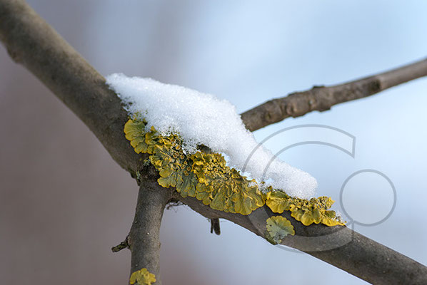 100214_DSC0018 Schnee Winter