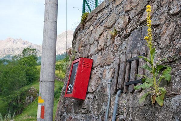 100710-040 Chialvetta Rittersporn