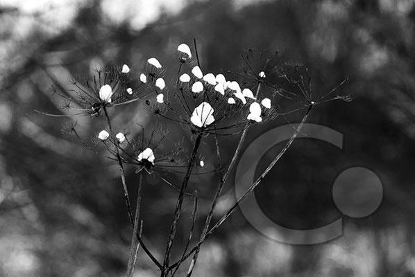 100214_DSC0034-sw Schnee Winter