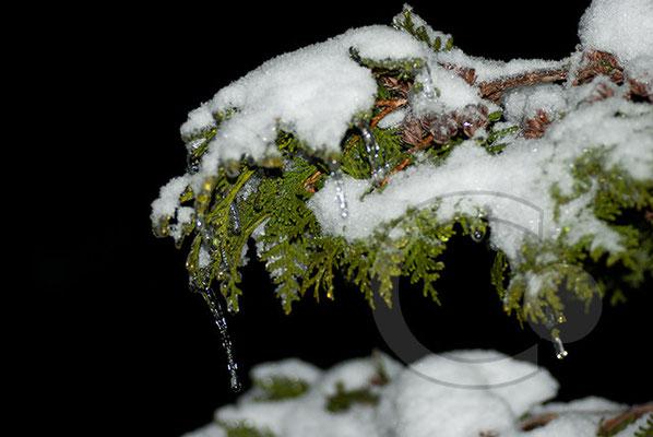 101219_DSC0098 Eis Winter