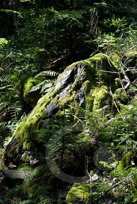 120805_DSC0127 Wald Moos Südtirol Italien