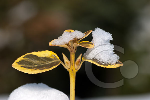 100306_DSC0113 Schnee Winter