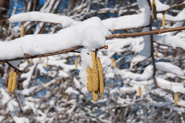 100306_DSC0072 Schnee Winter