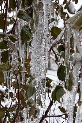 100108_DSC0025 Eis Winter